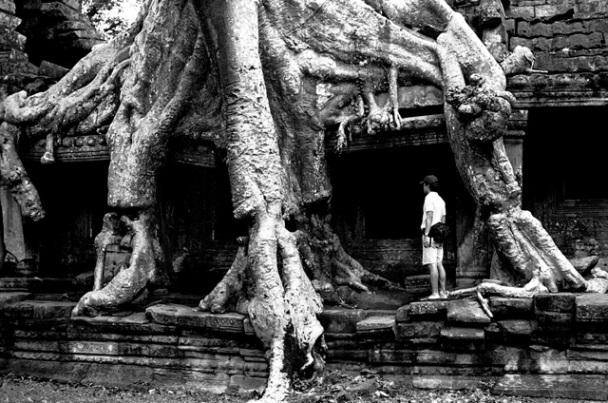 カンボジア・アンコール/遺跡を覆う巨大樹/photo by Shigeru Nanaumi